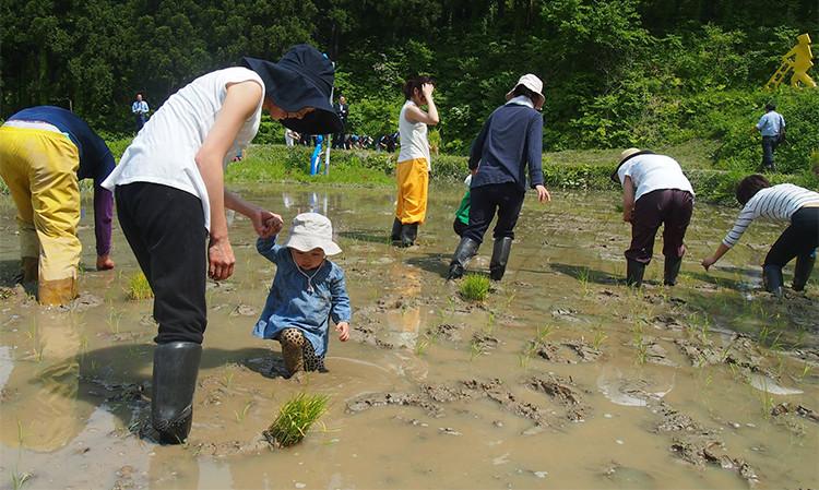子どもと共に参加した会社での田植えツアーの様子