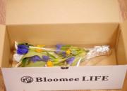 BloomeeLIFEは、約30種類以上の中からセレクトされた季節のお花が届く「花の定期便」。500円、800円、1200円からセレクトでき、週1~2回でお届け日を設定。不在の時にはスキップも可能など、フレキシブルに選べるのも魅力。https://bloomeelife.com/